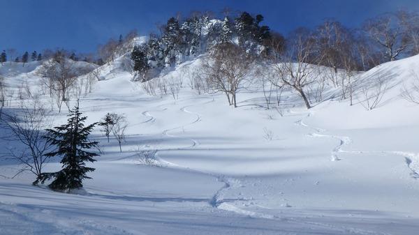 タップリの新雪を楽しみました♪