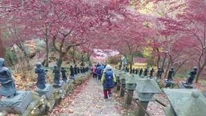 大山寺の参道を下りる