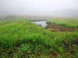 霧の鎌池湿原
