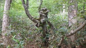 """通称""""ETの木"""""""