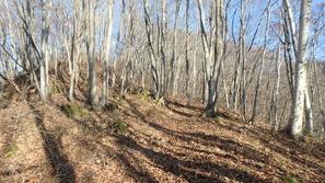 落葉した樹林帯を歩く