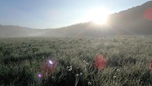 朝露の大江湿原