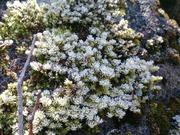 苔にも霜がつきました