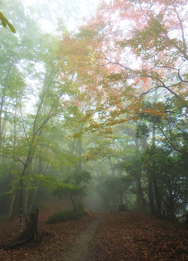 濃い霧の登山道