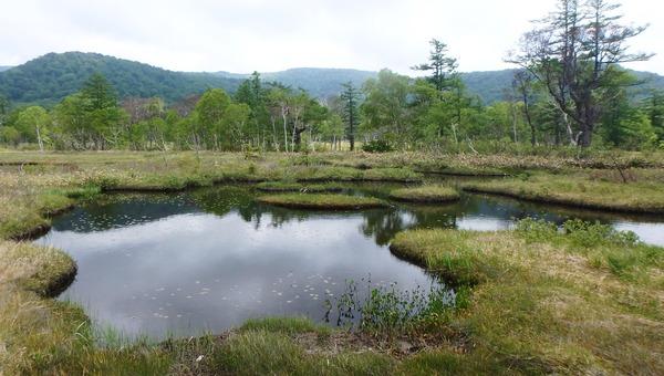 イキイキしだした池塘の緑