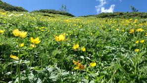 稜線の花畑は今が盛り♪