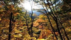 山麓の紅葉