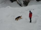 埋没者を探す救助犬とハンドラー