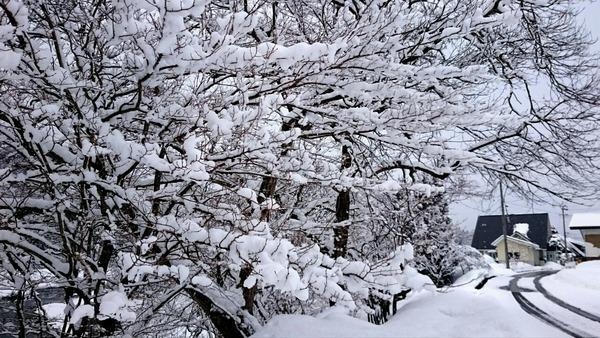 白馬はまだまだ雪の花