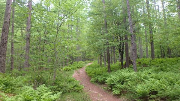緑にけむる登山道