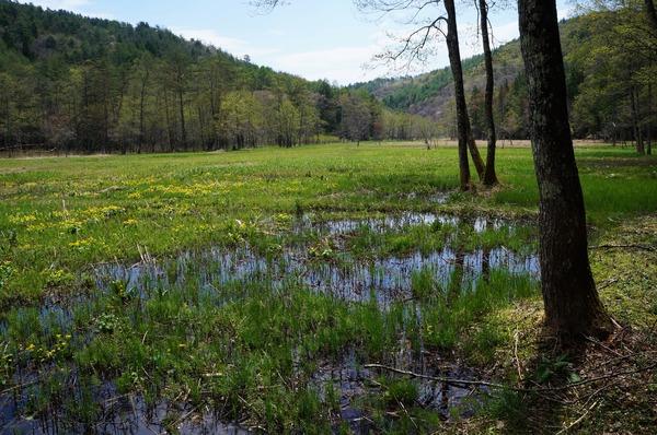 居谷里湿原の散策路から