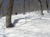 ブナ林を二俣に向け滑走