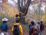 中山沢近くにて広葉樹の観察