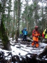 うっすら雪が積もった樹林帯