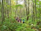 木漏れ日さわやかなブナ林帯を歩く