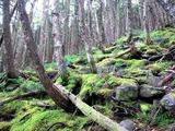 森が生き生きしていました♪