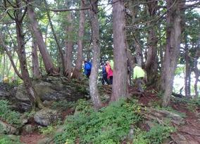 樹林帯を縫って登る