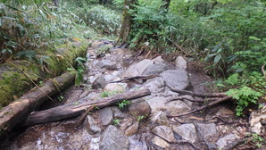 登山道の一部に水が流れ込み、滑りやすいので注意です