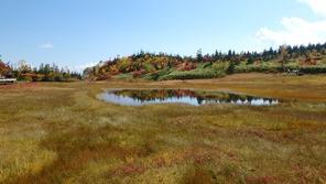 栂池自然園の浮島湿原