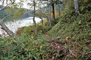 風吹大池のほとりは樹林帯のアップダウン