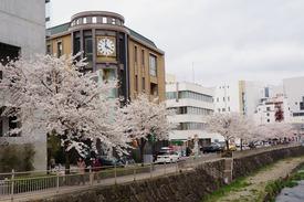 松本店近くの時計博物館と桜