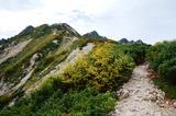 唐松岳への登山道