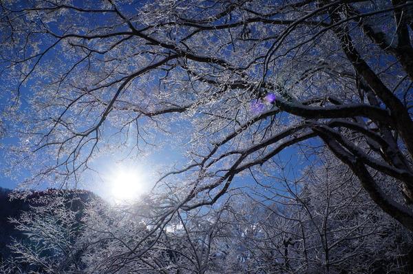 枝がキラキラ、氷の花が咲いています