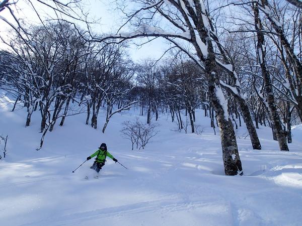 樹林帯のふっかふか雪♪