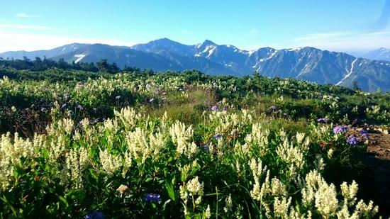 朝日岳山頂から白馬岳を望む