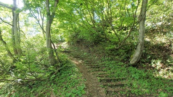 ブナ林の新緑の登山道
