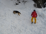 埋没者を探す救助犬スズ