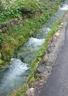 湧き水が流れる水路