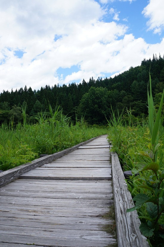 親海(およみ)湿原