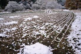 田んぼもうっすら雪化粧