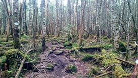 苔むす登山道