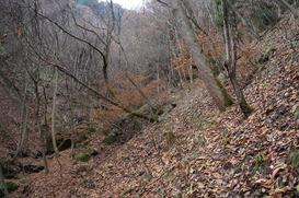 雑木林のトラバースは足元が滑りやすかった