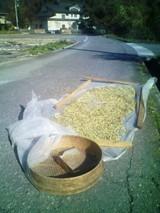豆の天日干し