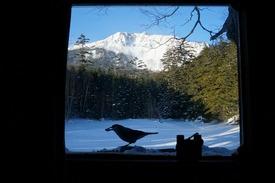 小屋の窓辺とホシガラス