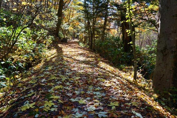 木漏れ日が心地良い道を進む