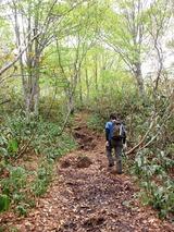 ブナ林帯の登り