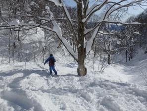 新雪パウダーも、たくさんの人が滑るとあっという間に荒れてきます