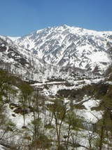 新緑まぶしい白馬岳2010
