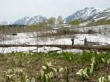 水ばしょう湿原と白馬三山