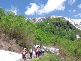 新緑と残雪の登山道を進む