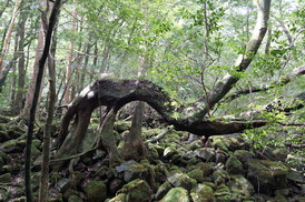 楠川前岳への登山道�