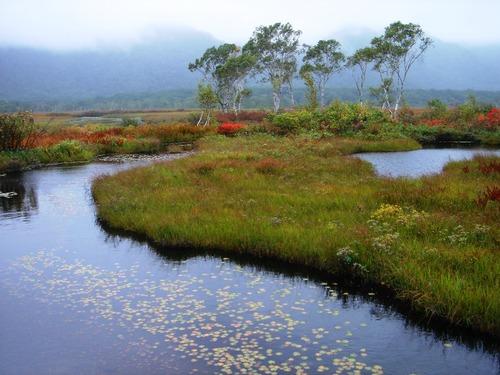 草紅葉の湿原