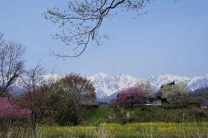 大出公園の周遊コースから望む白馬三山