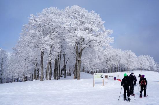美しい樹氷を眺めながらスタート