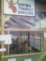 トナカイ牧場の囲い