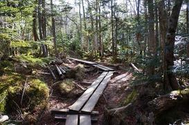 しっとりした森の中を歩く